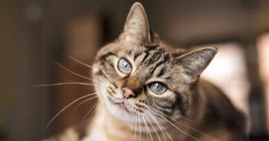 Fiocruz identifica cão e gato com anticorpos contra a Covid-19